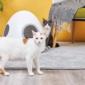 Lo último de Xiaomi es una pequeña casa para mascotas con ventilación y control de temperatura y sueño.