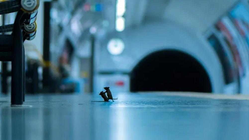 Pertempuran epik antara 2 tikus di subway memenangkan penghargaan dan menjadi viral di web