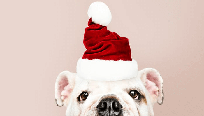 BEST CHRISTMAS TREE WALLPAPER FETURED IMAGE