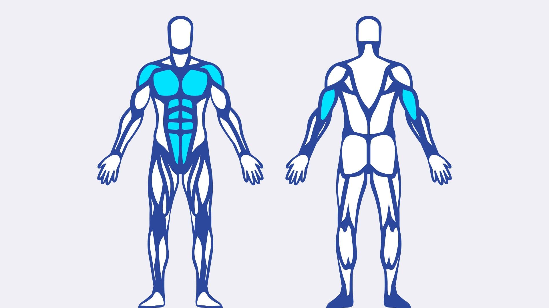 Las flexiones apuntan a su pecho, hombros, tríceps y músculos centrales.